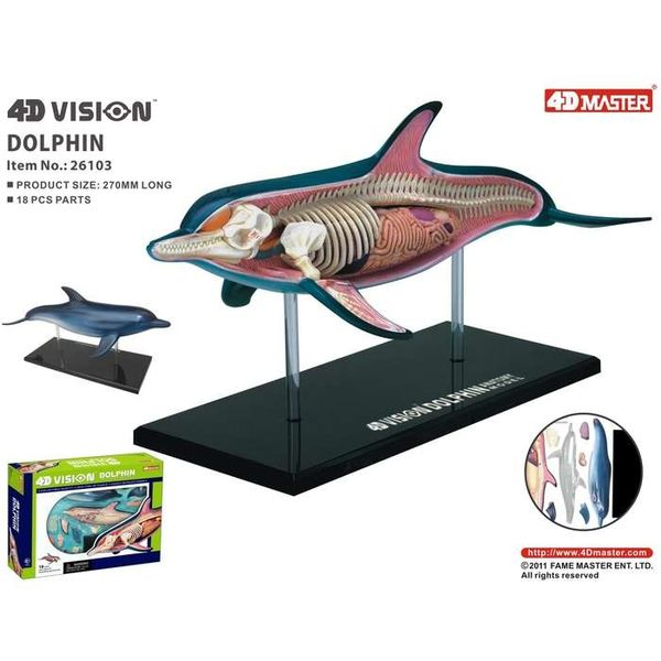 4D Vision Dolphin